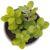 Цветок искусственный Арти М 269-105 Суккулент в горшке 9*13 см зеленый