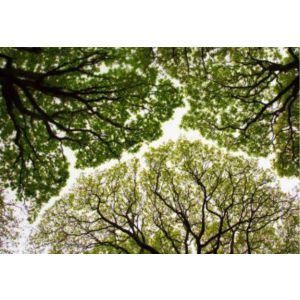 Купить Картина Строй-Комплект Кроны деревьев 120*84
