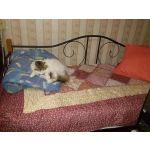 Кровать Сакура Garda 7 90*200 цвет вишня